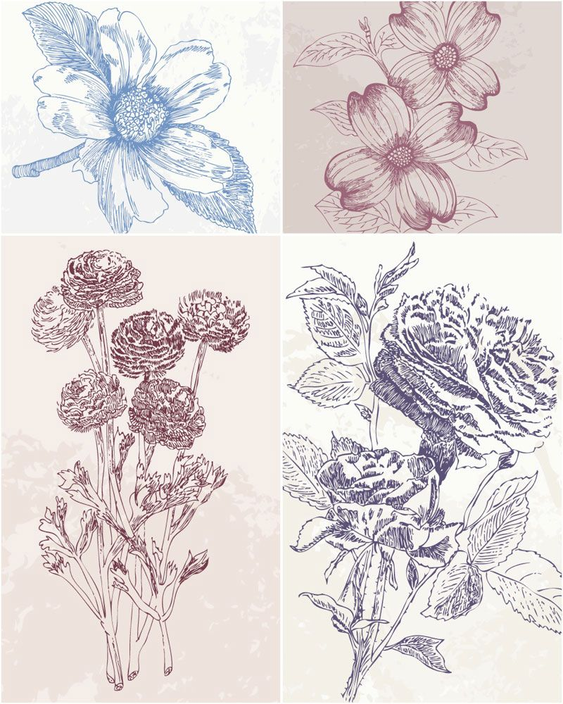 Vintage Vector Graphics Blog Page 29 Flower Drawing Flower Illustration Hand Drawn Flowers