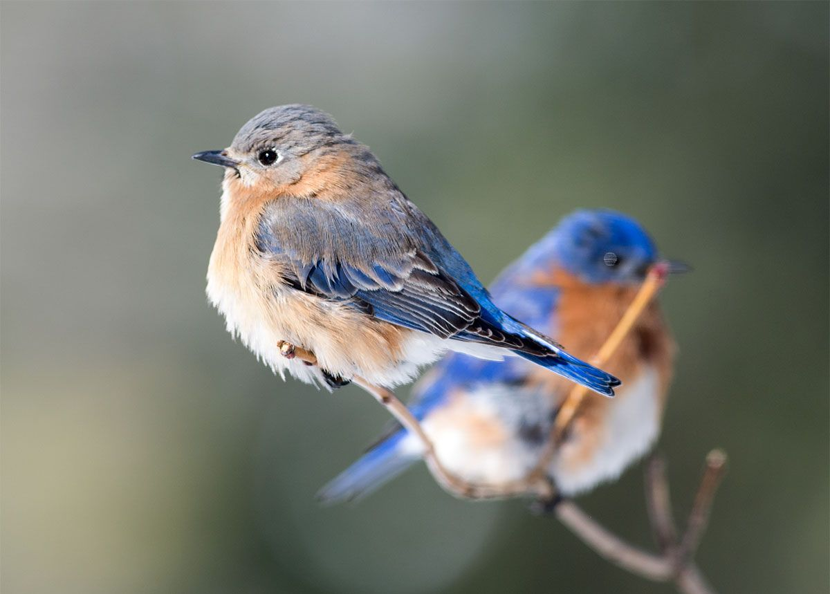 How to Take Part in the Great Backyard Bird Count   Great ...
