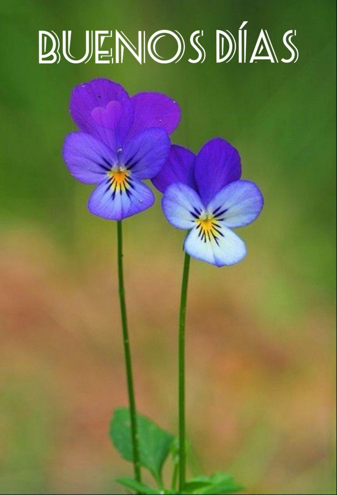 Pin de Zaya Rivero en Screenshots   Flores bonitas, Flores increíbles,  Jardín de flores