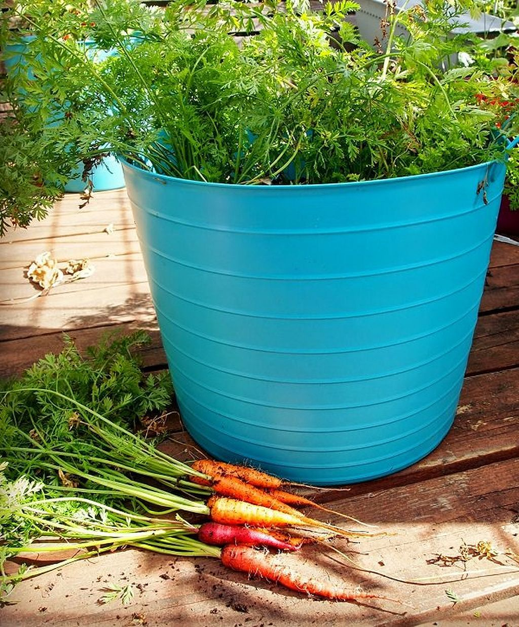 21 Growing Carrots In Containers Container Gardening 400 x 300