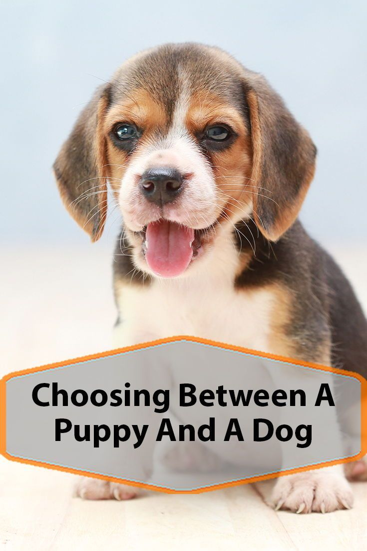 Should I Buy A Puppy Or An Adult Dog? #petadoption