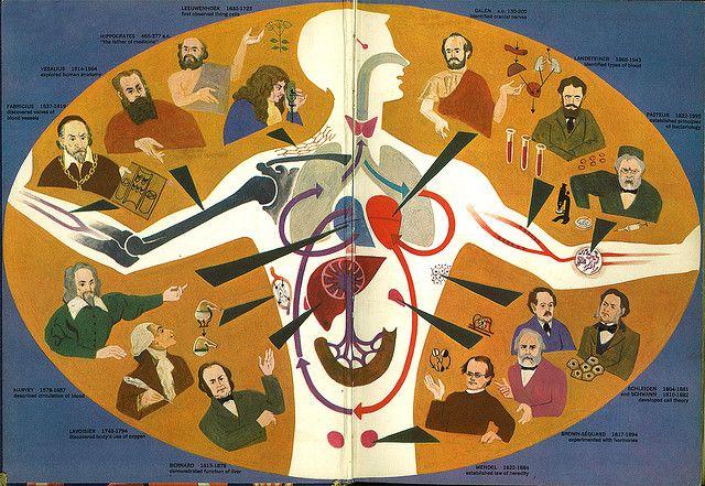 The Human Body   Illustrations by Cornelius De Witt. 1959. Golden Press.