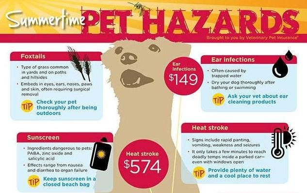 This Article Functions As A Psa To Pet Owners The Dangers Mentioned In The Article Are Accompanied By Illustrations For A Visual R Pet Health Pets Health Zone