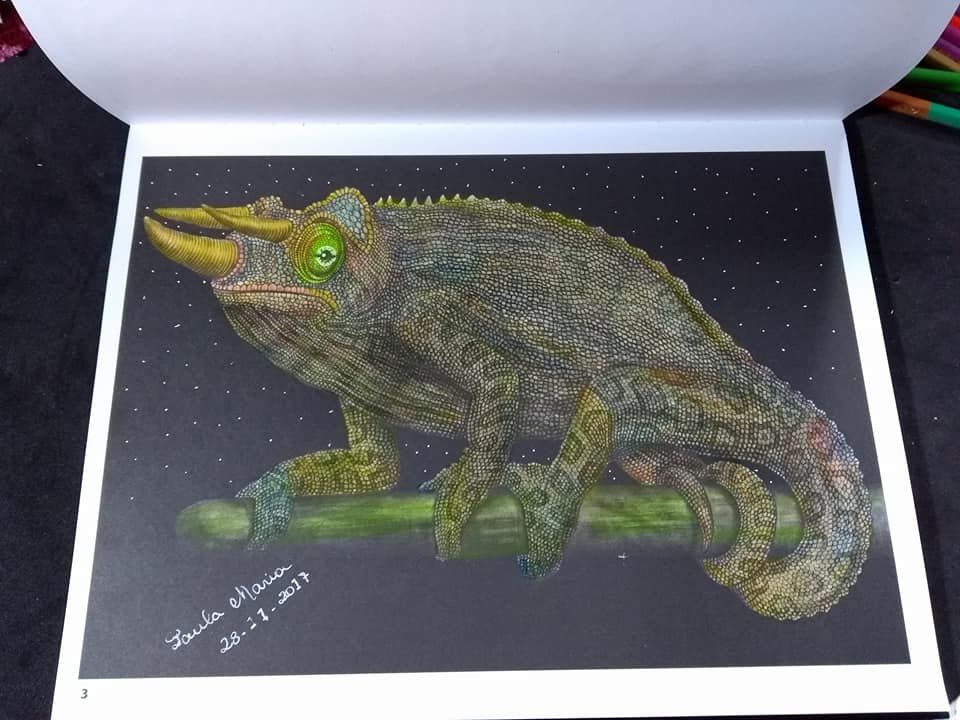 Jacksons Chameleon By Paula Rodrigues