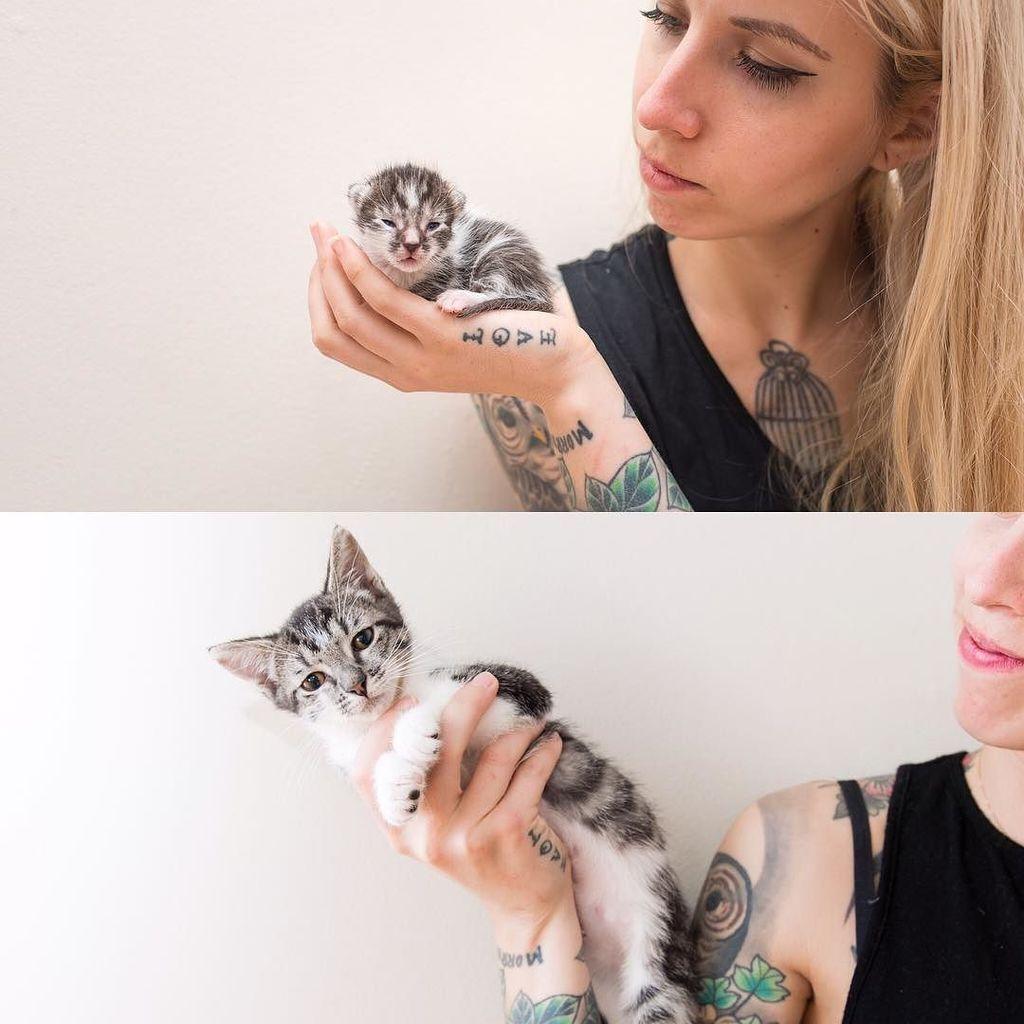 Kitten Lady Kittenxlady Twitter