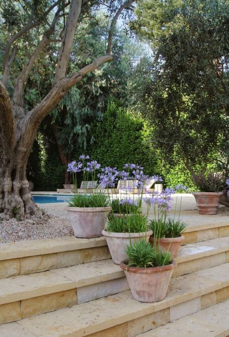 Modern Mediterranean Backyard Makeover On A Budget ...