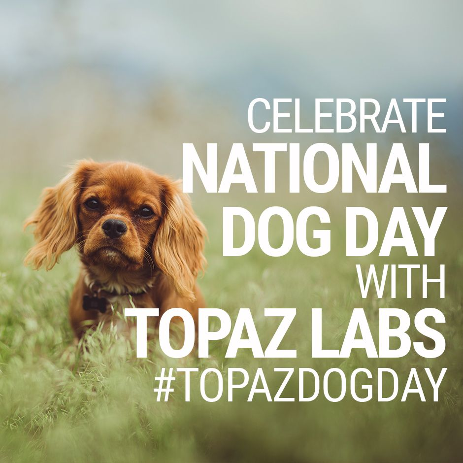 Today is National Dog Day. Tag us using the hashtag