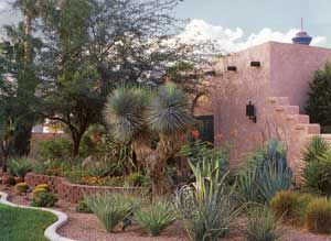 Beautifully shading a western exposure | Xeriscape ...
