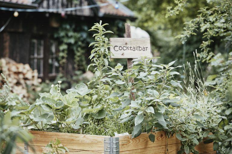 Verruckte Krauter Fur Das Hochbeet Die Top 5 Plantura Hochbeet Garten Bepflanzen Pflanzen