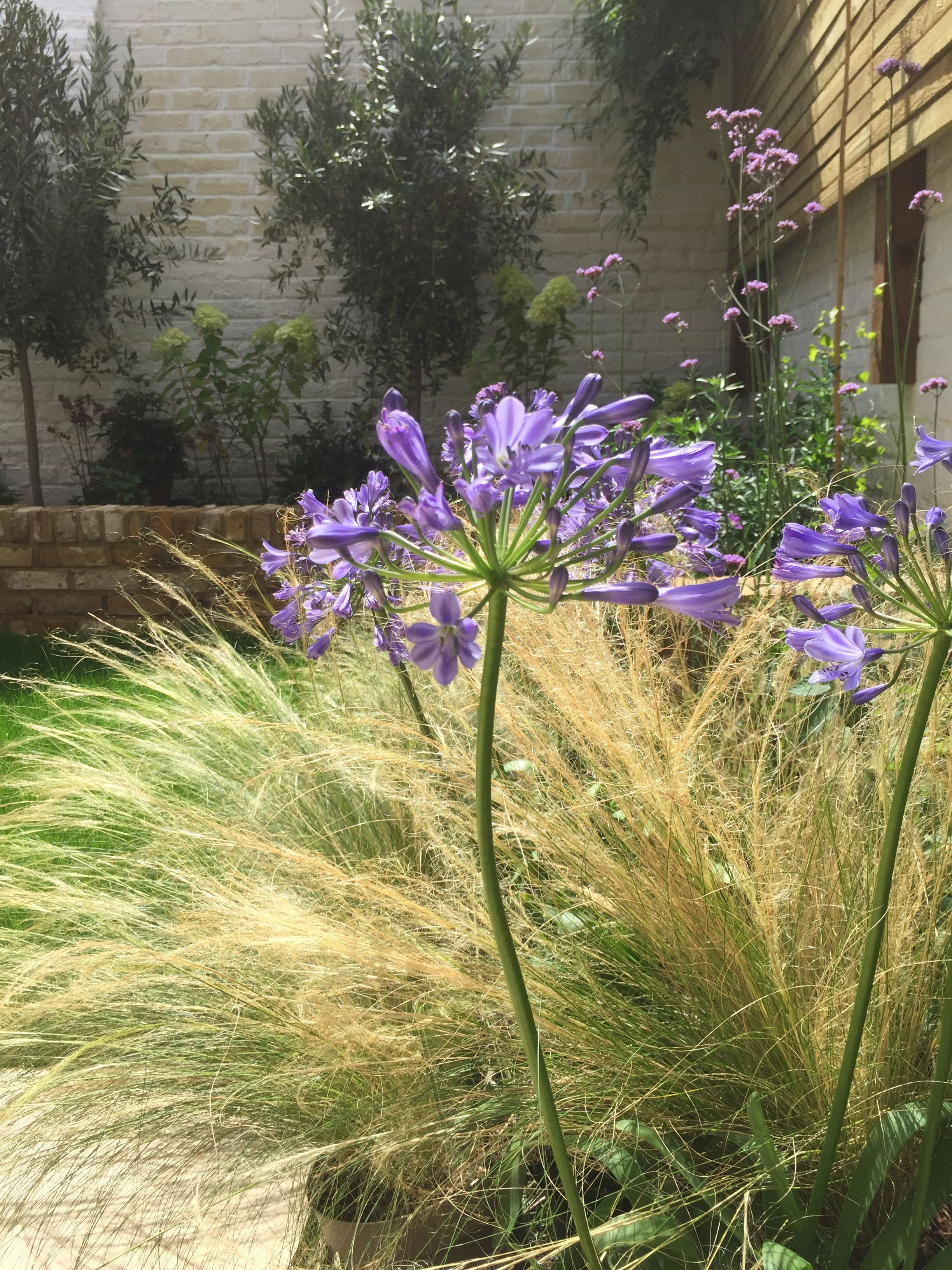 Modern classic terrace in Vauxhall. Agapanthus and stipa. | OUTER ...