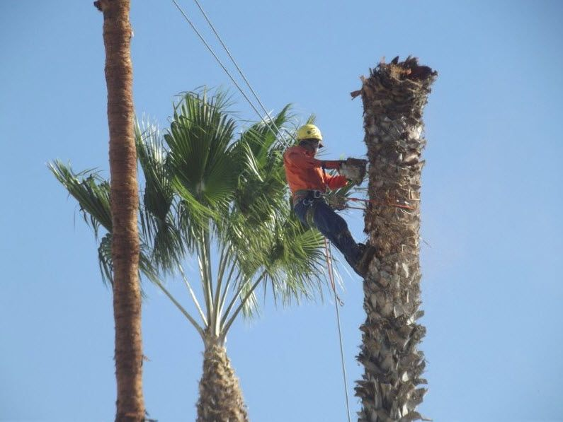 Best less tree services arborists live in the