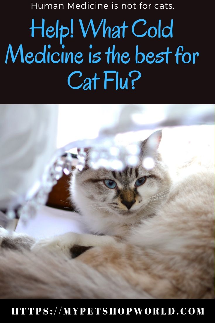 Help! What Cold Medicine is the best for my cat. Cats
