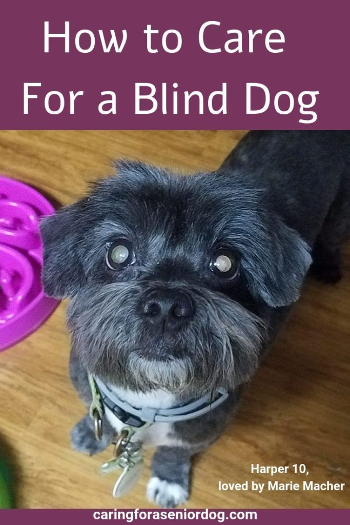 How to Keep Your Blind Dog Safe  Caring for a Senior Dog  When people ask me how to care for a blind dog I always reply the same way you would care for a