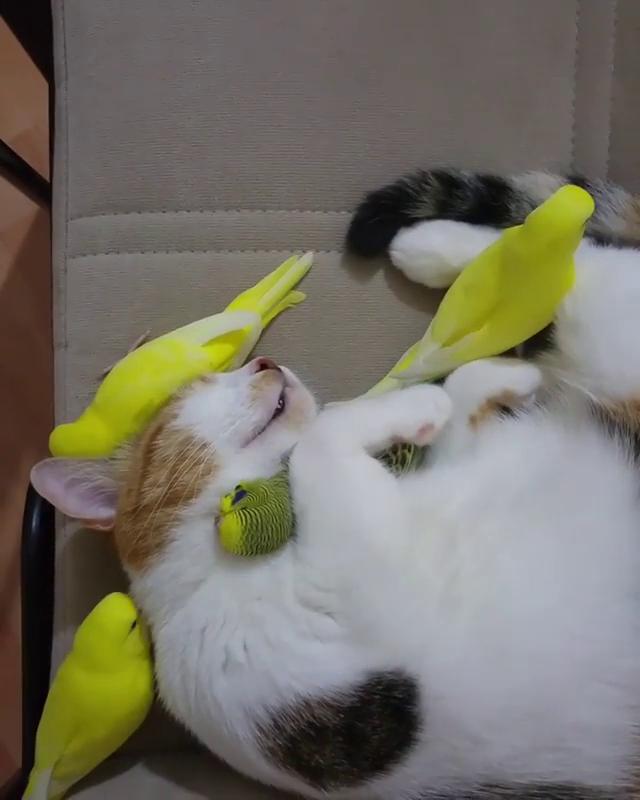 Kitty achieves budgie Nirvana #animalsandpets
