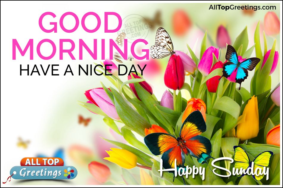 Have A Nice Day Sunday Images With Nice Sunday Greetings, Special Sunday  Quotes With Awesome Greetings, Inspiring English Good Morning Wishes  Greetings, ...