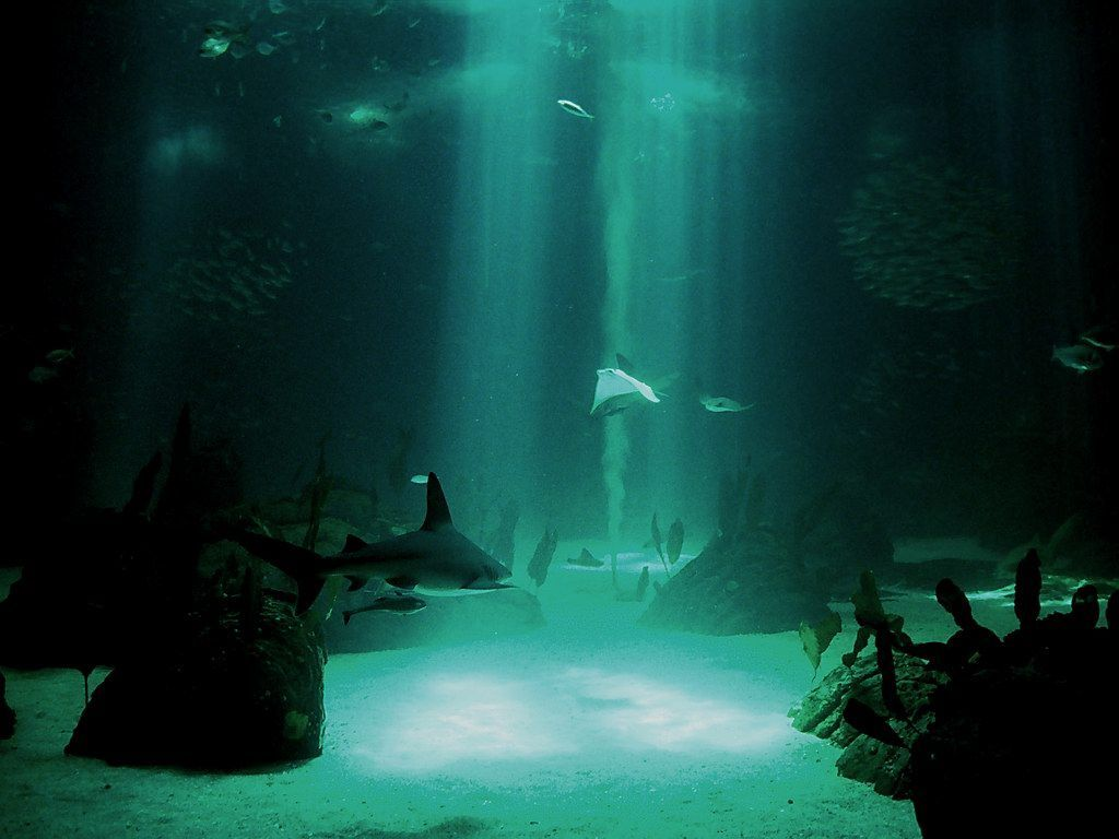 Undefined Wallpapers Under Water 50 Wallpapers Adorable Wallpapers Underwater Wallpaper Underwater Background Underwater Photos