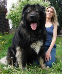 Whoah- Favorite Large Dog Breeds