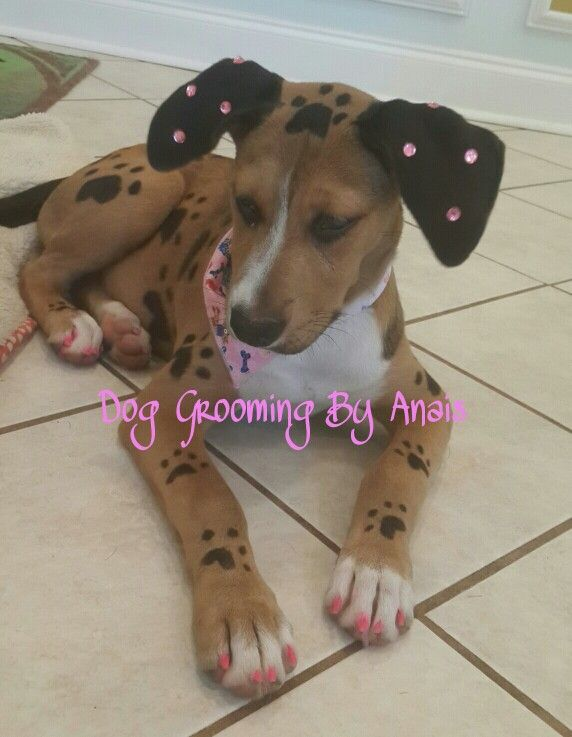 Puppy With Paw Prints Creative Grooming Dog Grooming Dog Grooming Shop