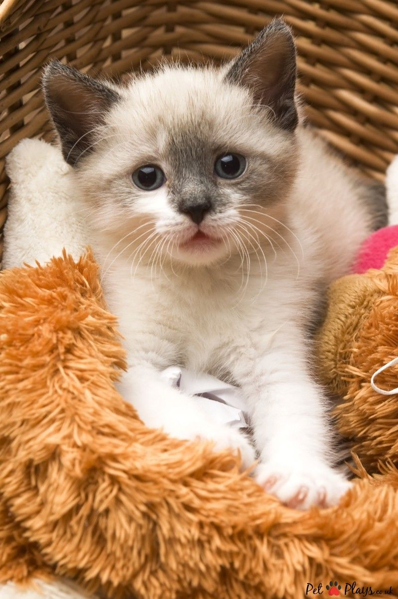 7 food your cat should never eat cats kittens kitten