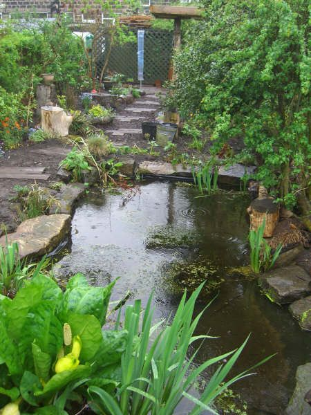Wildlife Garden Pond - Constructing a wildlife pond is one of the best ways to encourage birds, insects, mammals and amphibians to your garden. Any pond is useful in the garden, but one made specially for wildlife will tempt birds and mammals to drink, dragonflies and damselflies to breed, and encourage toads, newts and frogs to take up residence in your garden. A pond is also a constant source of interest for those with a little time to sit and watch.