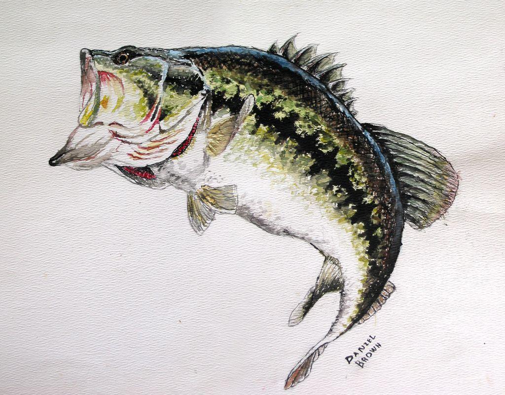 Image Detail For Largemouth Bass Fish Drawings Fish Painting Animal Paintings