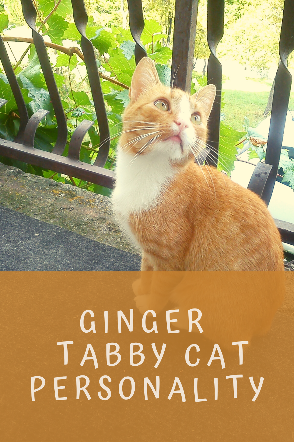 Ginger Tabby Personality in 2020 Cat personalities