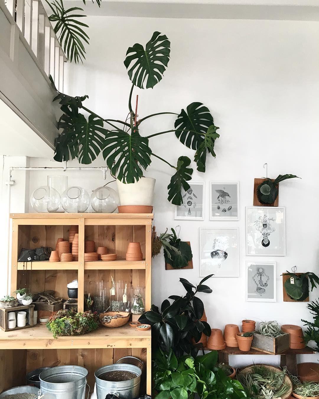 Plants Plants Pinterest Plants Spaces And House # Beestudio Muebles