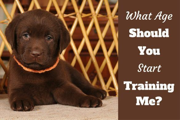 How To Crate Train A Puppy Day Night Even If You Work 2020 Puppy Training Labrador Puppy Training Lab Puppy