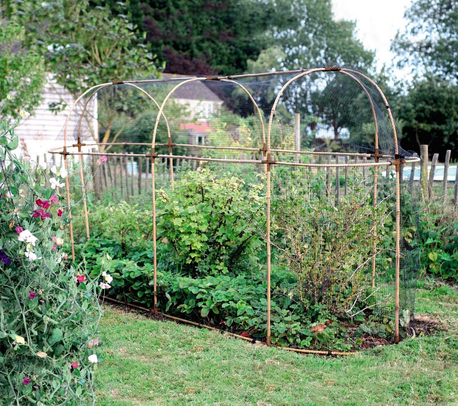 Potager Garden Blogs: Fruit Cage, Fruit Garden