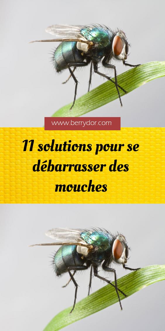 Epingle Sur Animaux Et Insectes
