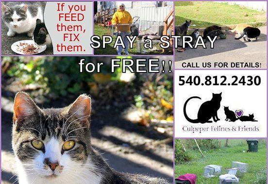 COURTESY SHARE for Culpeper Felines & Friends (Virginia ...