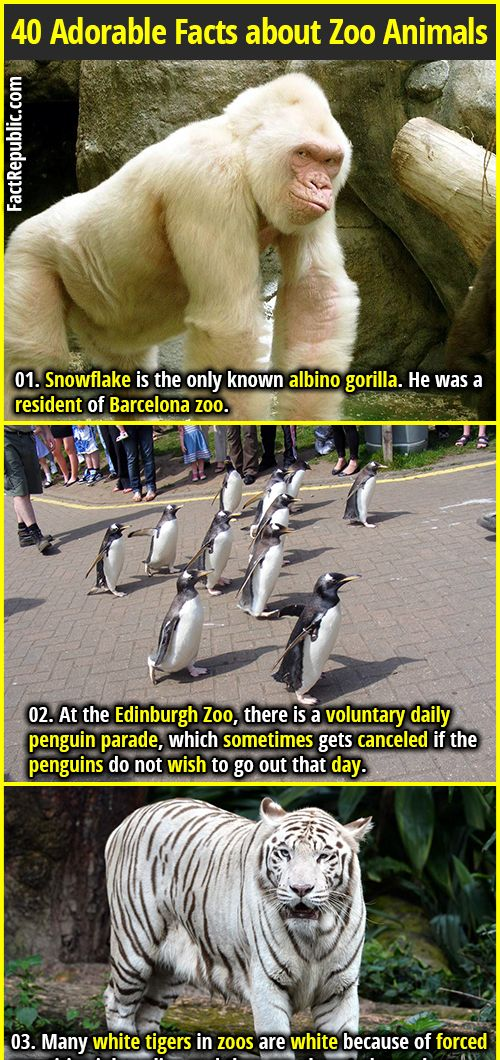 40 Adorable & Terrifying Facts about Zoo Animals | Zoo ...