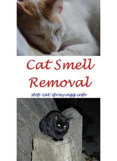 cat pee humor what to spray on plants to keep cats away - raid flea killer plus carpet and room spray cats.cat urine smell arm hammer cat litter deodorizer ...