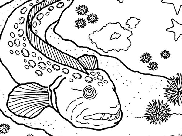 Wold Eel   Happy Aquarium Month!   Pinterest