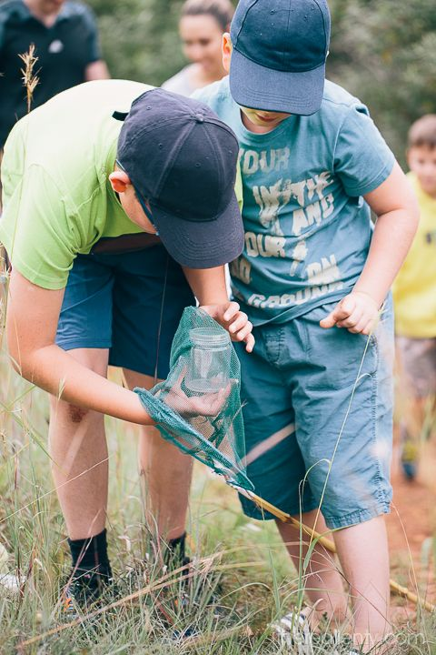 Walking with butterflies at Kloofendal
