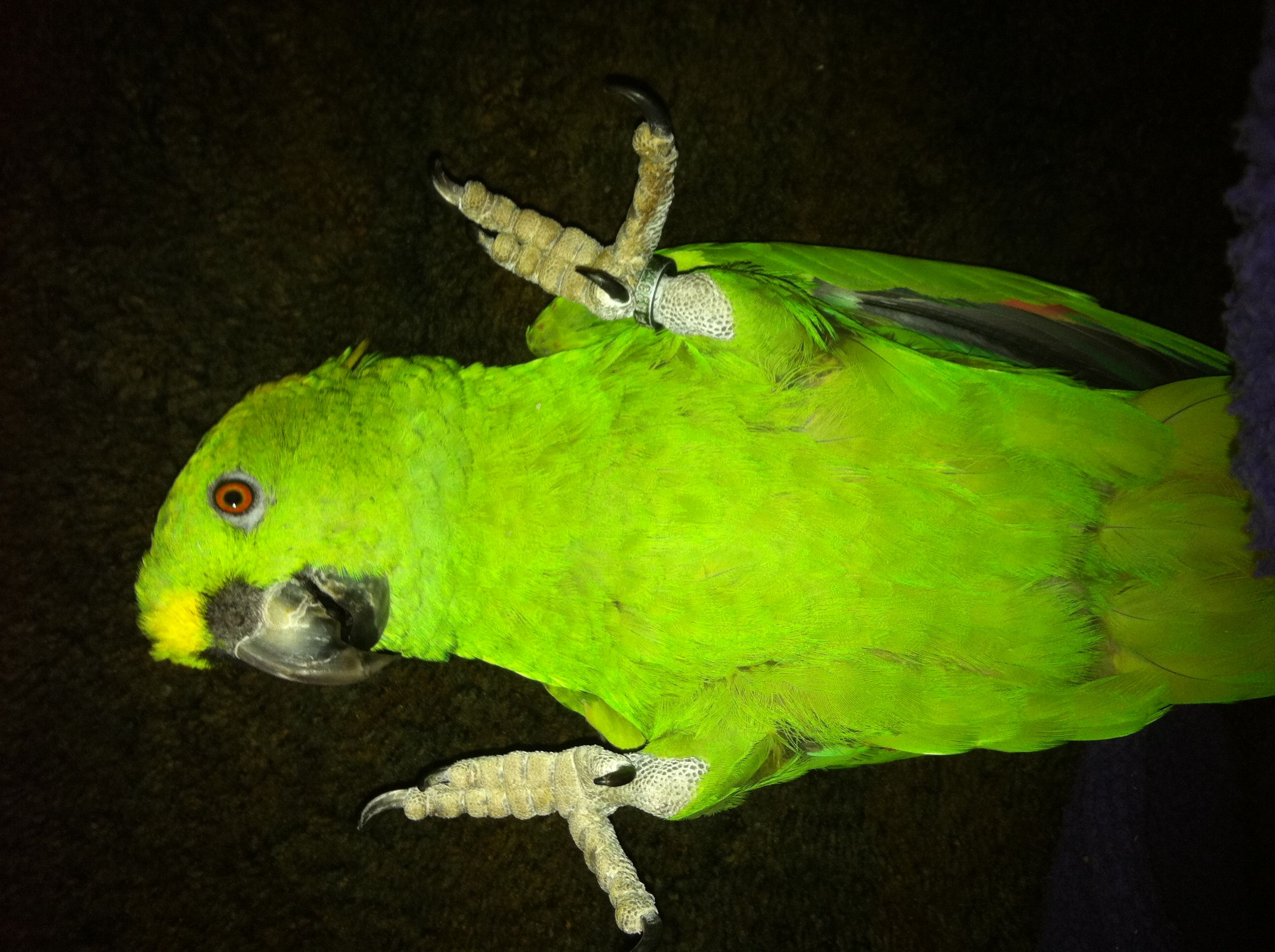 Whatz up ??? | Birds Animals Parrot