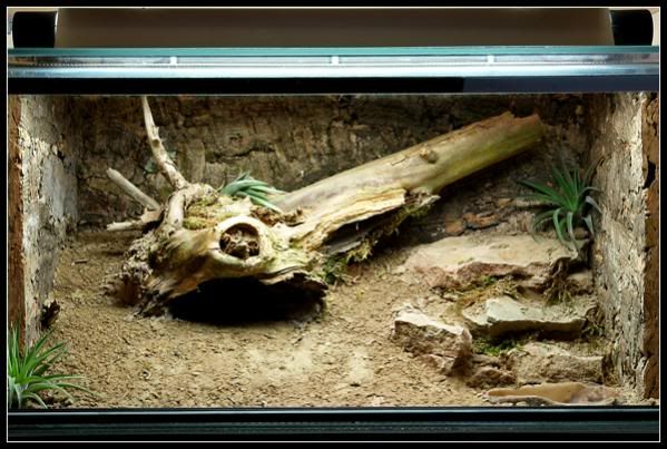 Love The Sloping Substrate Galapagos Tortoises Gecko
