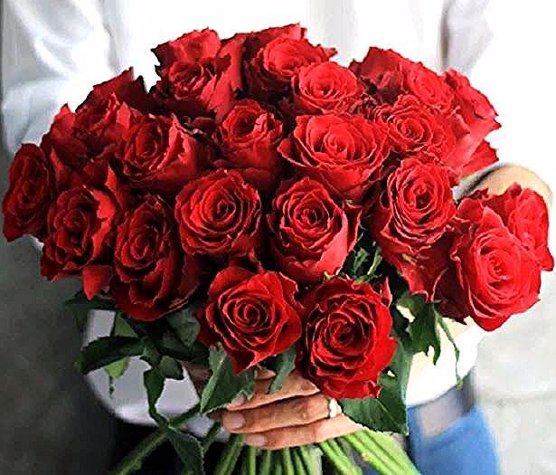 30 Bunga Mawar Merah Yang Indah Unduh 7700 Gambar Bunga Mawar Yang Cantik Dan Indah Gratis Download Kumpulan Gambar Bunga Mawar Yang I In 2020 Plants Rose Flowers