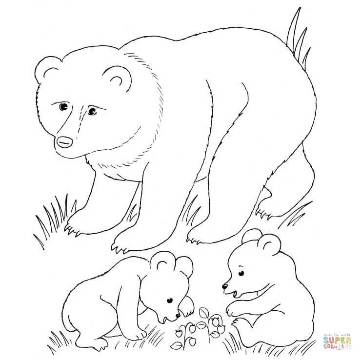 Bear Mother And Bear Cubs Coloring Page From Brown Bears Category