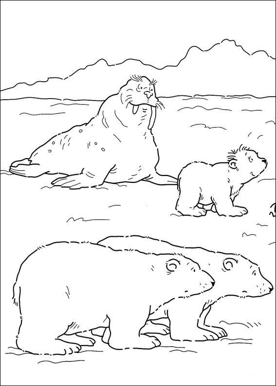 print kleine ijsbeer kleurplaat kleurplaten noordpool