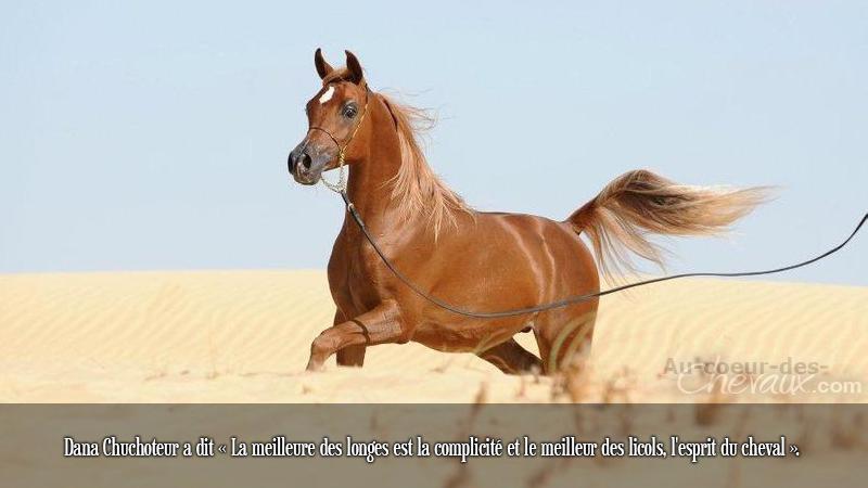 cheval arabe citation