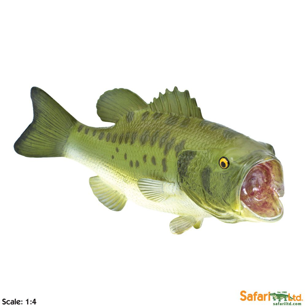Omg this largemouth bass cannot believe itus time for the holidays