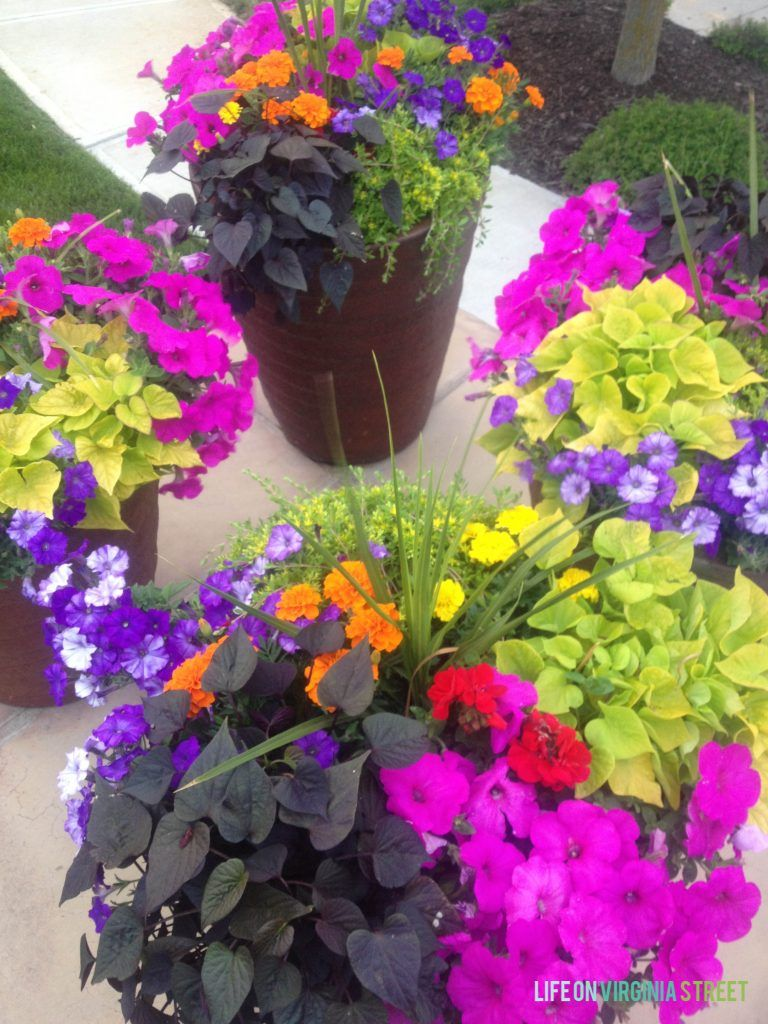 How To Prepare Planters For Summer | Life on Virginia Street