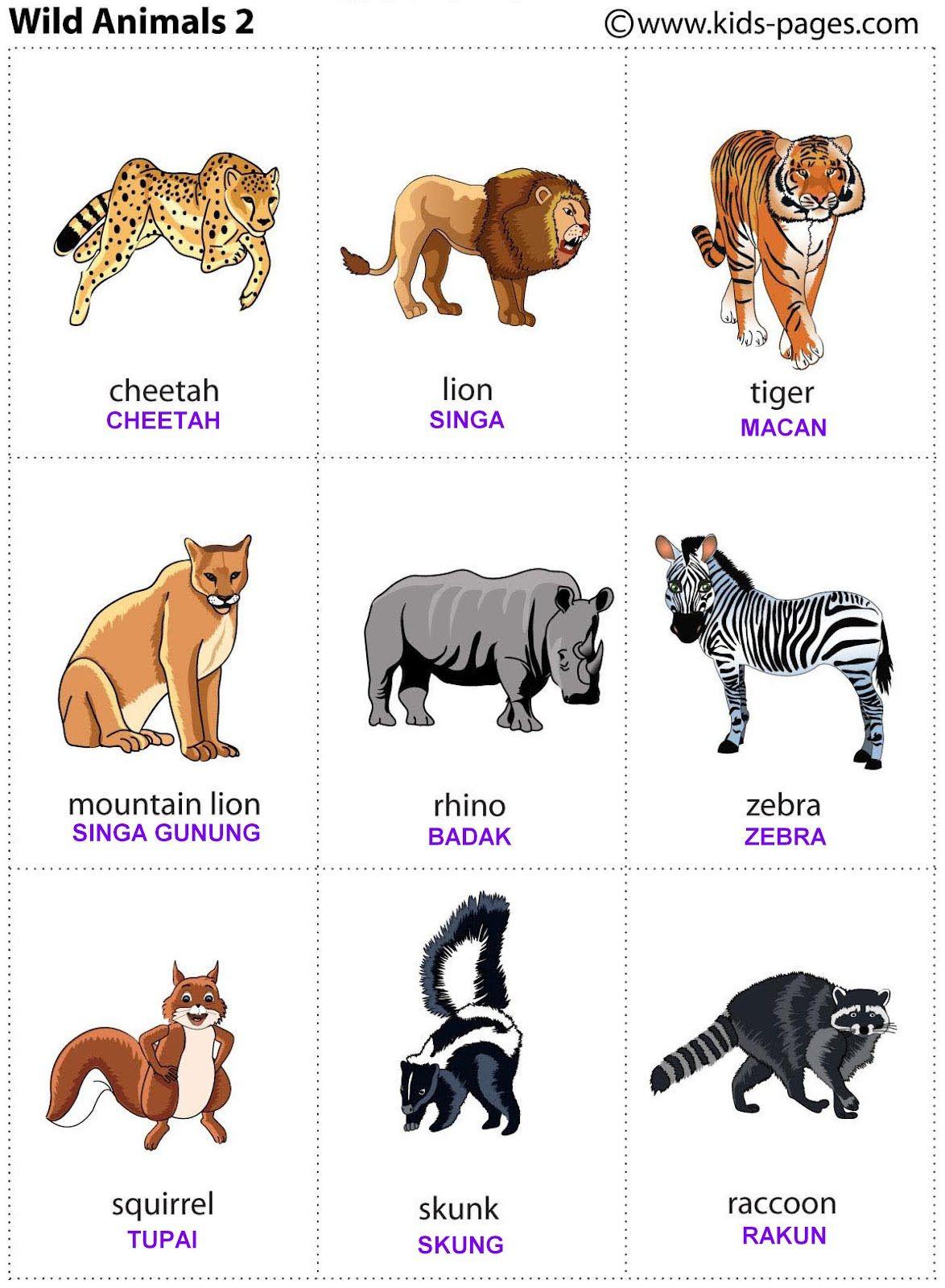 7+Wild+animals2.JPG 1,174×1,600 pixels