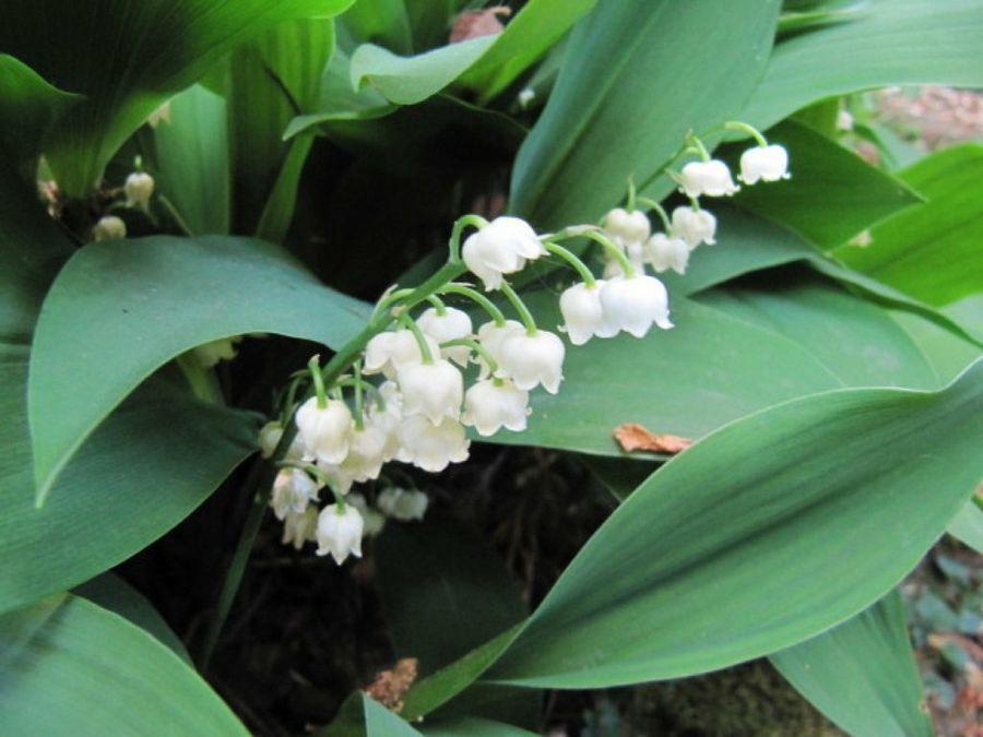Flores con forma de campana