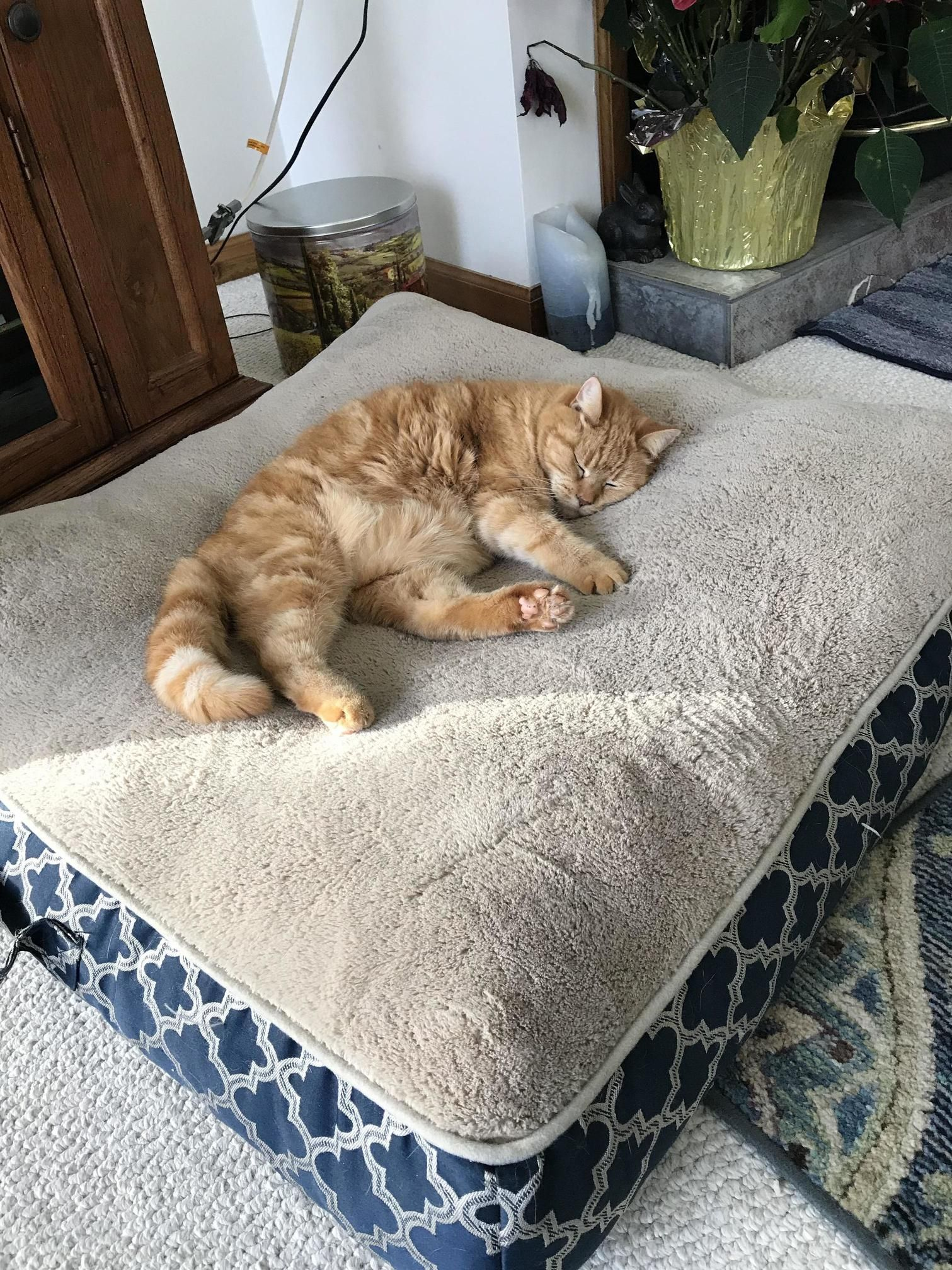 Sleeping On The Dog Bed Lol  Httpcutecatshqcomcats