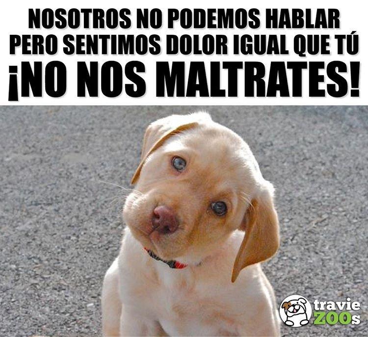 Por Favor Se Su Voz Y Comparte Este Importante Mensaje Canino Dog Perro Maltrato Amor Perros Tristes Perros Frases Perros