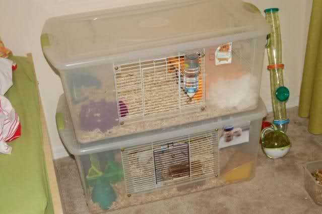 Diy bin cages for small animals hamster cages for Diy hamster bin cage