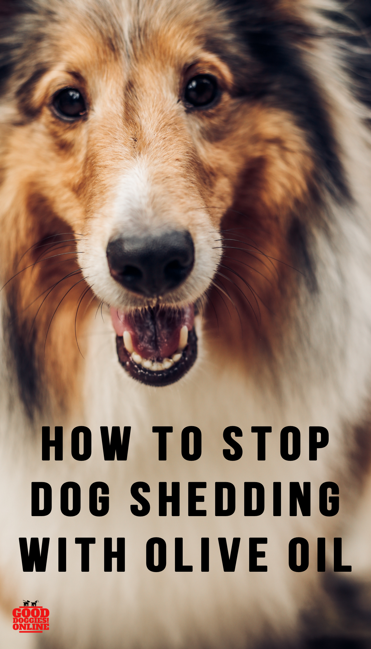 How To Stop A Dog From Shedding Using Olive Oil Dog Shedding Stop Dog Shedding Dogs