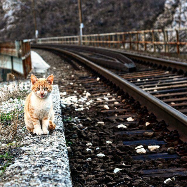 Waiting for train.  #likebosnia #bosniaandherzegovina #herzegovina #cat  #railway #trainrail #travel